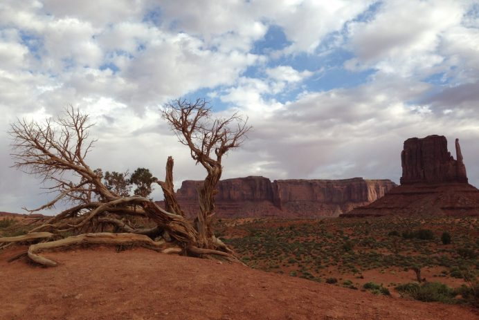 A Bare Tree and West Mitten Butte