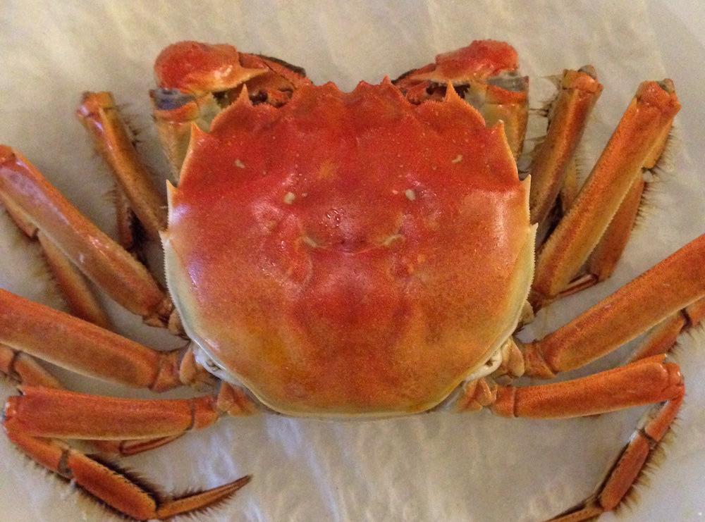 chinese-mitten-crab-2