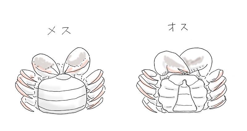 chinese-mitten-crab-8