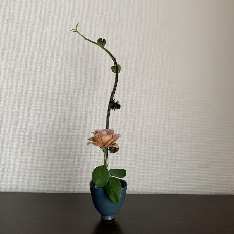 Nicandra physaloides with rose, photo by Yoko Kadokawa
